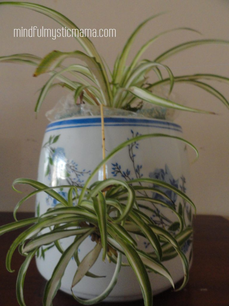 10 Houseplants That Clean Indoor Air Woven Stars